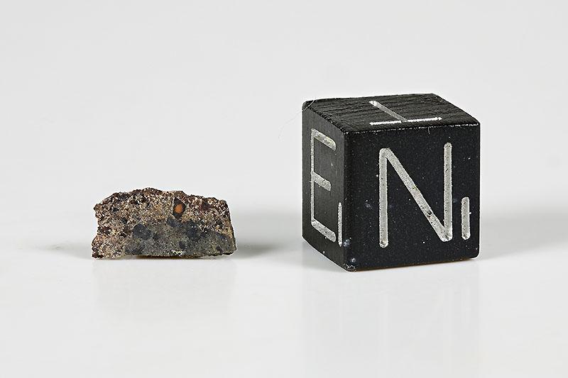 NWA 1195